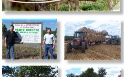 Colis viande bovine les 26 et 27 Octobre 2021