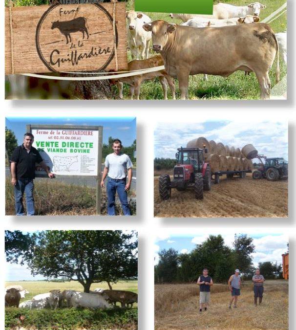 Colis viande bovine les 31 Aout et 1 er Septembre 2021